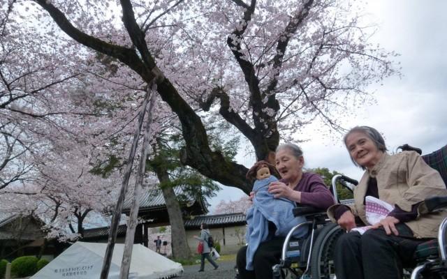 特別養護老人ホーム緑寿会山科苑の春