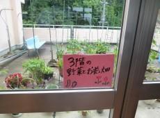 3階の野菜とお花畑